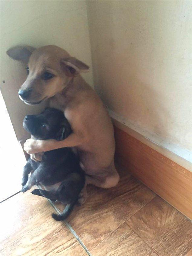 Minicik iki yavru birbirlerinden güç almaya çalışır gibiydiler.