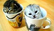 Bu Kediler Minnoş <3 1.KISIM