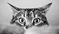 Kedi Severler Toplaşın: Sakarlıklarıyla Gününüz Neşelendirecek Birbirinden Sevimli Minnoşlar