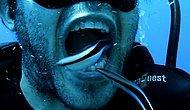 Dünyanın En İyi Dişçileri Suların Altında: Dişlerini Balıklara Temizleten Bir Acayip Dalgıç