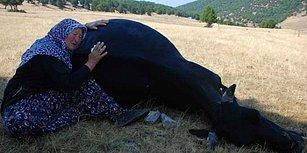 Yaşlı Çiftin Ölen İneklerine Sarılıp Ağlaması Sosyal Medyayı Harekete Geçirdi