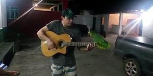 Tüm Zamanların En İyi Düeti Olabilir: Gitar Çalan Adama Eşlik Eden Papağan