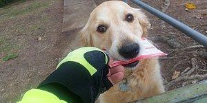 Mektup Almaya Bayılan Köpekçiğin Kendi Adına Kartpostal Yazan Koca Yürekli Postacı