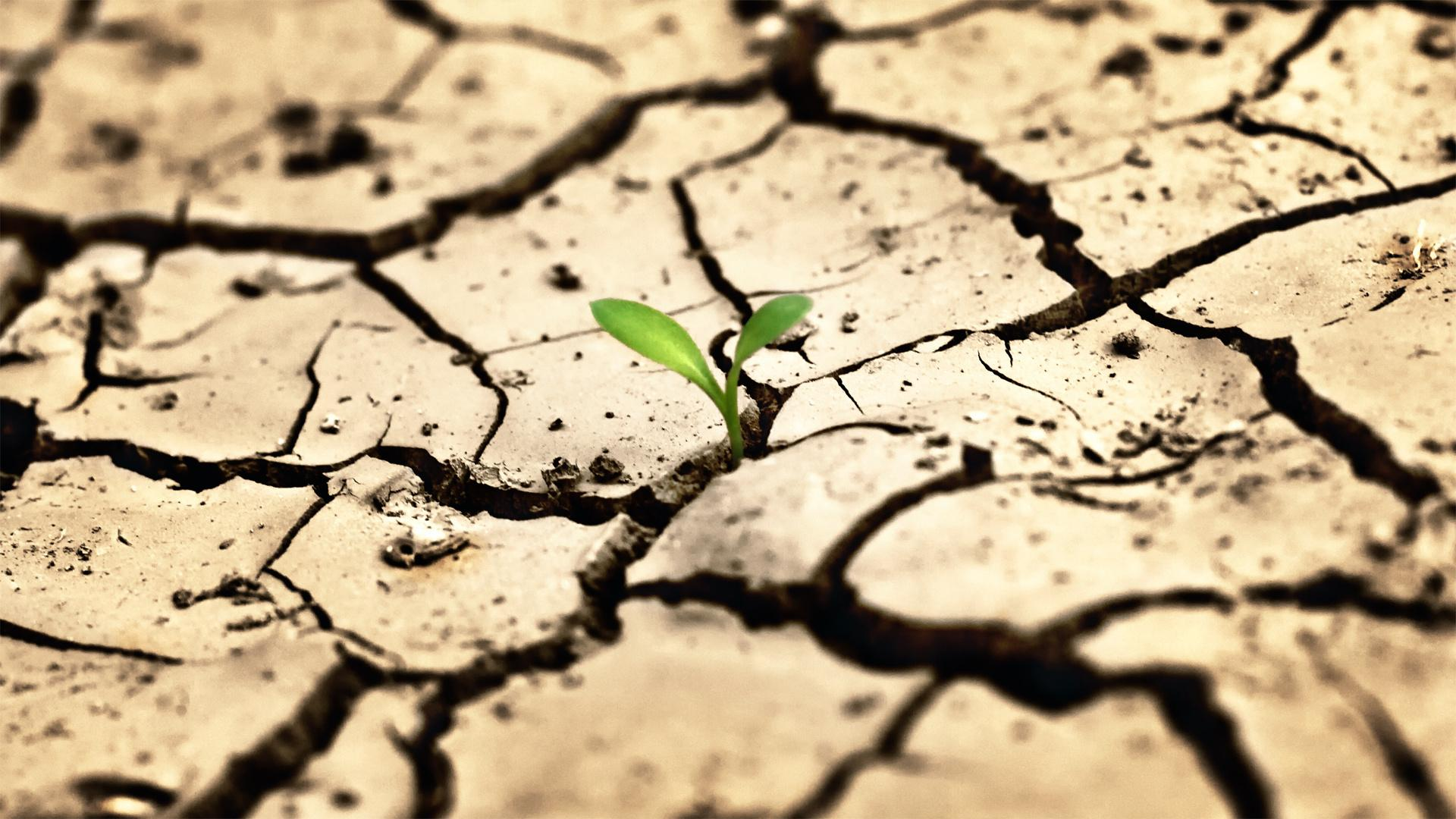 одуванчик трещины засуха dandelion crack drought подборки