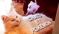 Kediler vs Pokemon: Kediler Pokemon GO Oynasaydı Nasıl Olurdu?