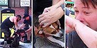 Acımasızca Av Köpeğine Saldırıp Hem Köpeği Hem de Sahibini Yaralayan Vahşi Pitbull