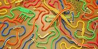Çılgın Domino Yarışlarına Hazır Mısınız? Bir Renk Seç ve Heyecana Ortak Ol!