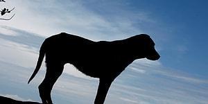 Bunu da Gördük: Nöroloji Uzmanı Profesör Sokak Köpeğini Bıçakladı!
