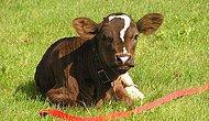 Postunun Üstünde Elle Çizilse Bu Kadar Güzel Durmayacak İşaretler Taşıyan 18 Özel Hayvan