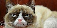 Huysuz Surat İfadesi ile İnternetin Fenomeni Olan 'Grumpy Cat' Artık Ölümsüz!