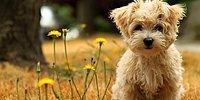 Rusya'da Köpeklere Özel 'Facebook' Geliyor
