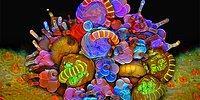 Sıra Dışı Fotoğrafçıdan Böceklere Bakış Açınızı Değiştirecek 14 Mikroskobik Fotoğraf