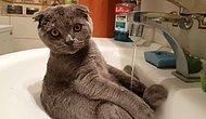 Kendi Başına Lavaboda Duş Alan Sevimli Kedi