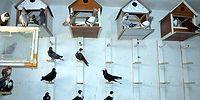 Türkiye'nin İlk Güvercin Oteli Diyarbakır'da Açıldı