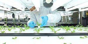 Yanlış mı Öğrettiler Bize Acaba: Organik Gıdalarla Alakalı Şok Eden Bir İddia Ortaya Atıldı!