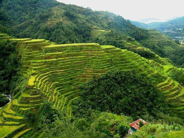 Banaue Pirinç Terasları - Filipinler