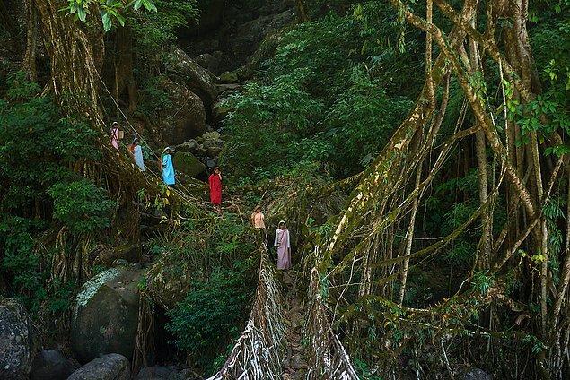 Khasi Köprüleri - Hindistan