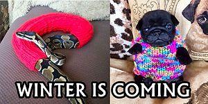 Onlar Kışa Hazır: Giydiği Kazakla Minnoşluğuna Minnoşluk Katan 26 Hayvan