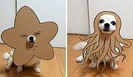 Köpeği İçin Kartondan İnanılmaz Tatlış Kostümler Kesen Japon Kadından 30 Güldüren Çalışma