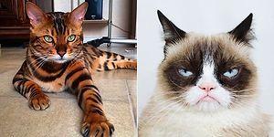 Onlar da Instagram'ın Zenginleri! En Çok Takip Edilen Dünyaca Ünlü 18 Minnoş Kedi