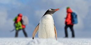 Antarktika Suları 35 Yıllığına Korumaya Alındı: Amaç Canlı Türlerini Muhafaza Etmek