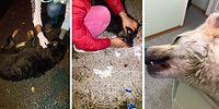 #SapancadaKatliamVar | Belediyenin Köpekleri Zehirlediği İddiası Sosyal Medyayı Ayağa Kaldırdı