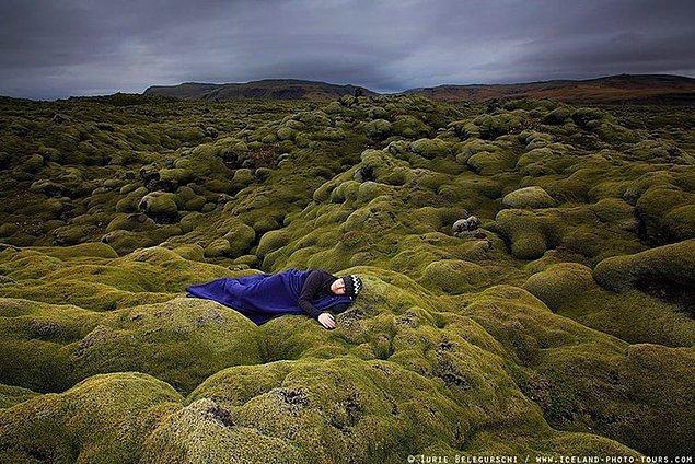 7. İzlanda yosunları