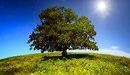 Ağaçlar ve Efsaneleri