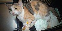 Bu Kez de Marmaris: Tecavüze Uğrayan Kedi Kurtarılamadı!