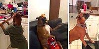 'Mannequin Challenge' Akımının En Sevimli Halini Gerçekleştiren Köpek
