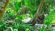 Dünyanın En Uzun Tropikal Ağacı Bulundu!