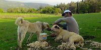 Çobanlık Yaparken Parti Kurdu, 60 İlde Örgütlendi: Hedef İktidar Olmak