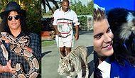 Yazıktır, Günahtır! Evcil Hayvan Seçimi Oldukça Sıradışı Olan 17 'Hayvansever' Ünlü