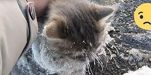 Buza Yapışmış Vücudu ile Hareketsiz Bir Şekilde Duran Kediyi Kurtaran Güzel İnsanlar