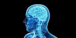 Beğenilerine Göre Beyninin Hangi Tarafını Daha Çok Kullanıyorsun?