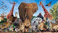 Hangi Vahşi Hayvanın Ruhuna Sahipsin?