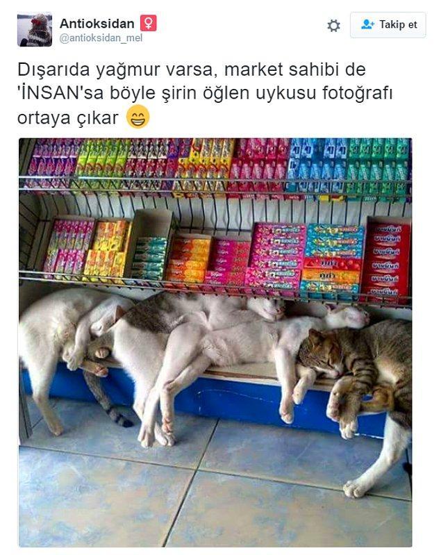 5. Bir market sahibinin, yağmurdan ıslandıklarını görünce dükkanında öğle şekerlemesi yapmalarına izin verdiği kediler.