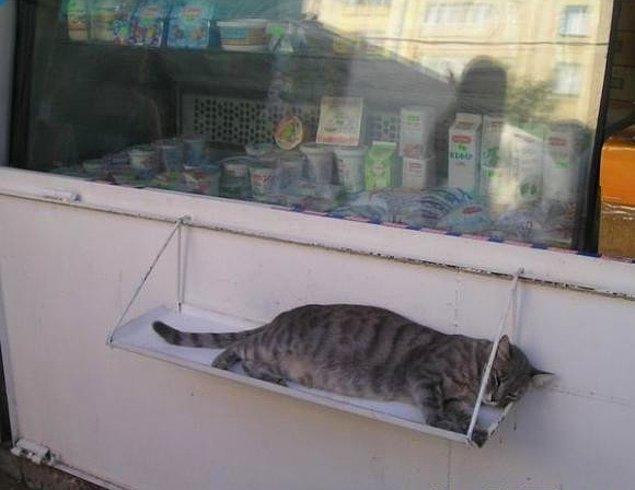 8. İyi niyetli bir dükkan sahibinin, rahatını bozmak istemediği bir kedi.