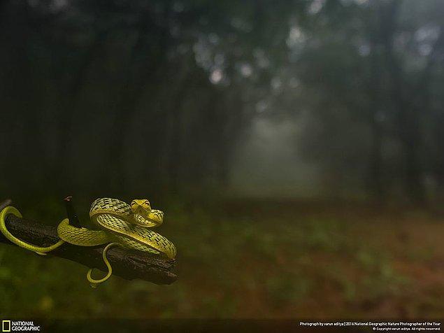 7. Hayvan portreleri dalında birincilik ödülü: Seni ormanın derinliklerine çekiyor!