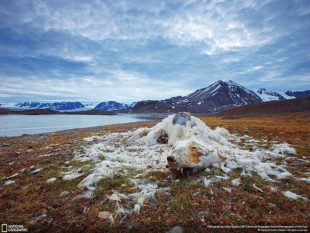 13. Çevresel sorunlar dalında birincilik ödülü: Yaşam ve Ölüm, Svalbard
