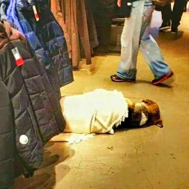 19. Beşiktaş'taki bir giyim mağazası çalışanlarının, üşümesin diye üstünü örttükleri bir köpek.