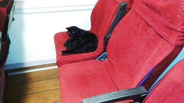 17. İzmir'de, doğum yapmak amacıyla bir kedi vapura biniyor ve...