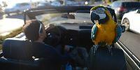 20 Yıllık Bir Dostluğun Kahramanları: Papağan 'Cabbar' ve Sahibi Metin Suna