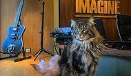 Avrupa'nın En Büyük Kedi Kafesi Rusya'da Açıldı: Kedi Cumhuriyeti!