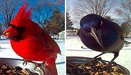 Beslediği Kuşların Yakın Plan Fotoğraflarını Çeken Kadından Yüreği Pır Pır Ettiren 29 Kare