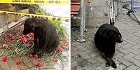 Şehit Fethi Sekin'in Her Gün Beslediği Köpek, Onun Görev Yaptığı Yerden Ayrılmadı!