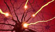 Yalnızca Duygularımızı Değil Vücudumuzu da Yöneten Kimyasalın Gizemli Dünyası: Serotonin