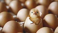 Bir Acayip Tavuk-Yumurta Paradoksu: Marka mı Kaliteyi, Kalite mi Markayı Belirler?