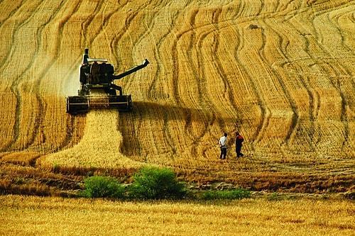 """Résultat de recherche d'images pour """"10 yılda yok olan tarım alanları"""""""