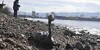 Kocaeli'nde Çevre Felaketi: Kuşları Telef Eden Firmaya 2 Milyon TL Ceza Verildi